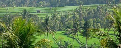 plaga petang village