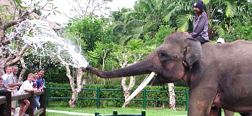 Elephant Safari Park Bali
